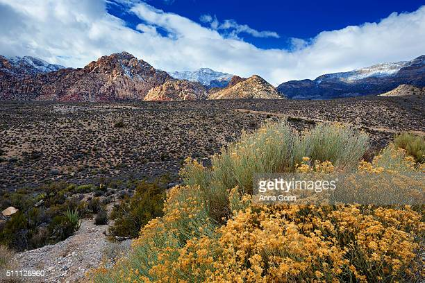 Goldenbush against backdrop of snow-dusted mountains at Red Rock Canyon outside Las Vegas, Nevada