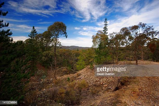 Goldfields Bushland