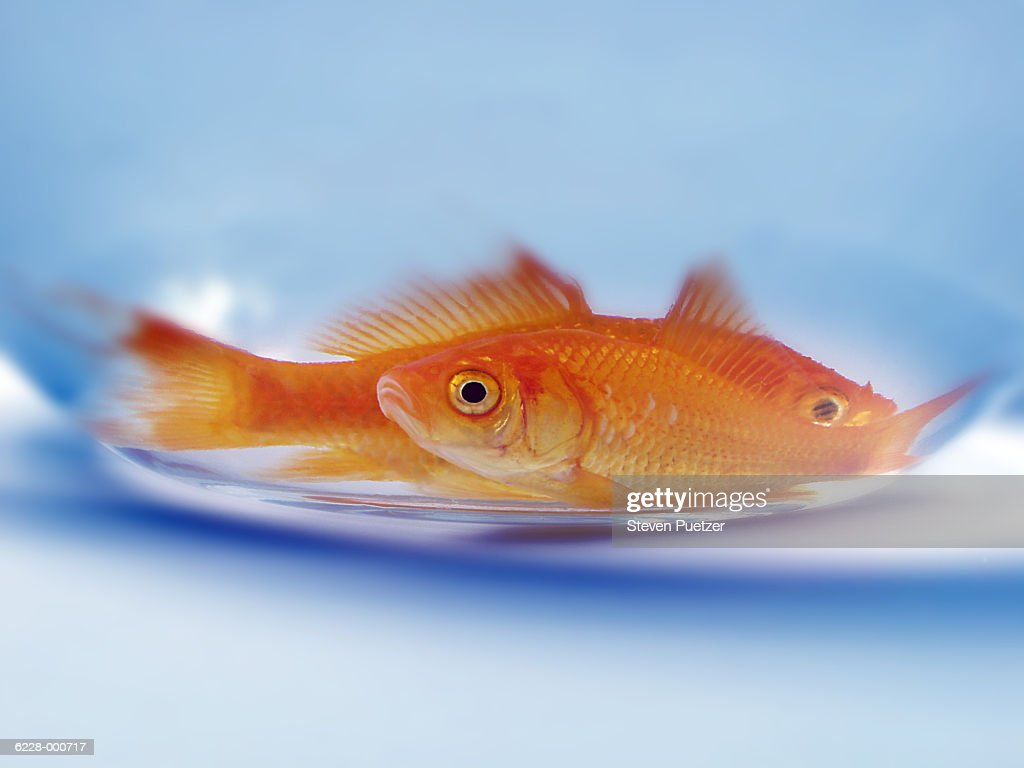 Goldfish at Bottom of Fishbowl : Stock Photo