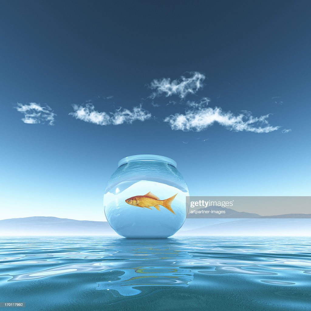 Goldfish in a fish bowl floating on the sea : Stock Photo