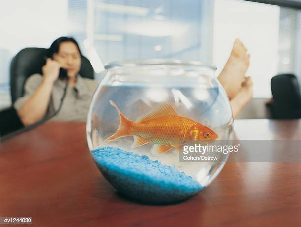 Goldfish in a Goldfish Bowl on a Desk in Front of a Businessman With His Feet up and Using the Phone