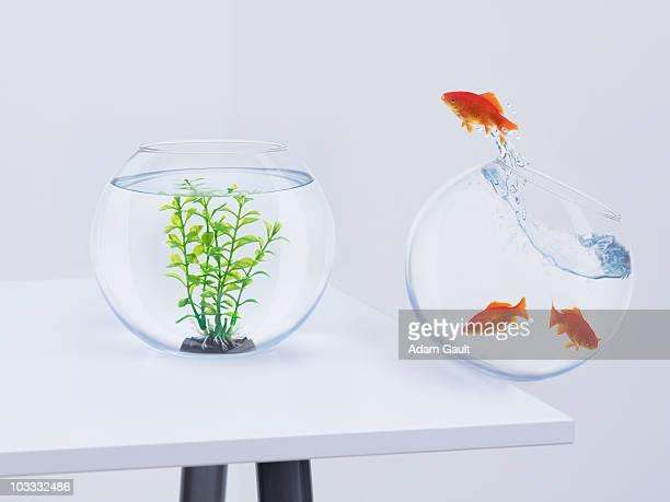 Goldfish in falling fishbowl jumping towards fishbowl with plant