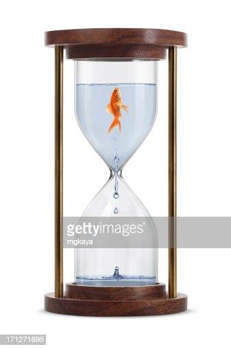 Goldfish in Hourglass