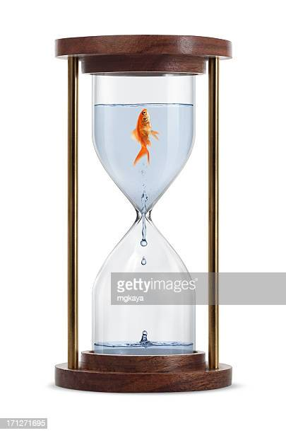 Goldfish in Hourglass