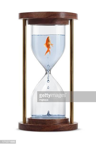 Pesce rosso a clessidra