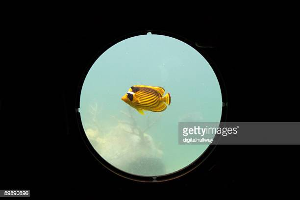 Pesce rosso con oblò