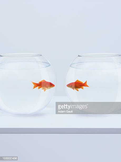 Goldfish in separate fishbowls looking face to face