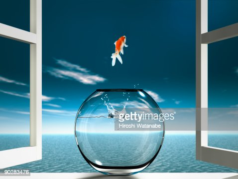 Goldfish  is jumping to sea from fishbowl : ストックフォト