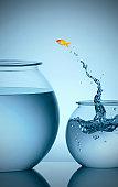 Goldfish jumping from small bowl into big bowl