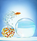 Goldfish jumping out of overcrowded bowl into em