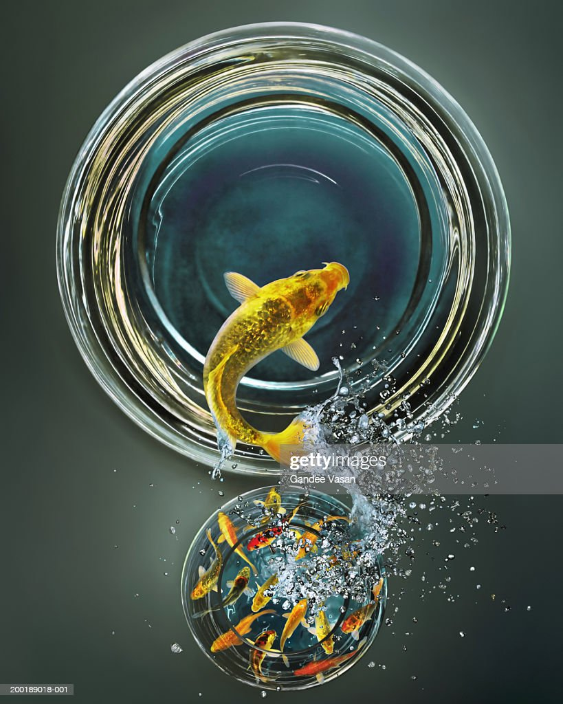 Goldfish leaping from crowded bowl to empty bowl (Digital Composite) : Stock Photo
