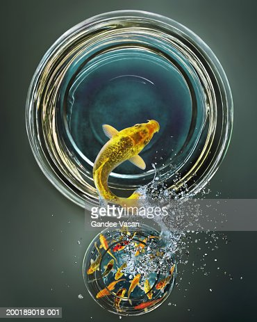 Goldfish leaping from crowded bowl to empty bowl (Digital Composite) : Foto stock