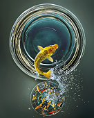 Goldfish leaping from crowded bowl to empty bowl (Digital Composite)