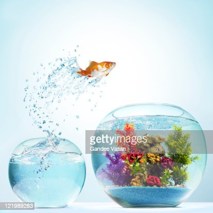Goldfish Leaping