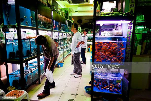 Peixe dourado mercado em Hong Kong