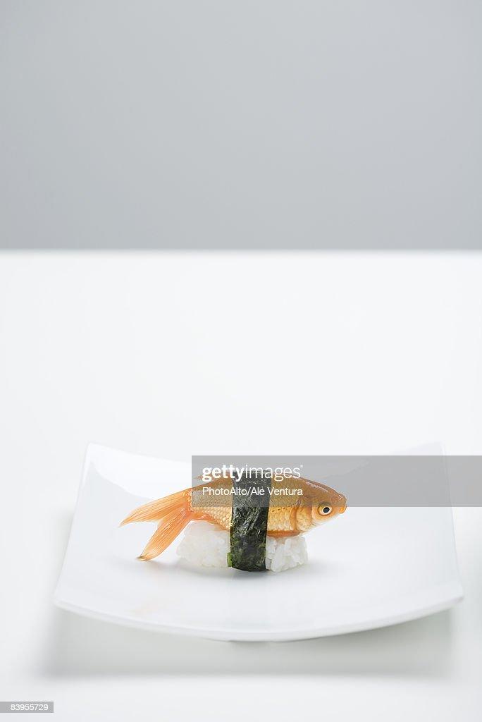 Goldfish prepared as nigiri sushi placed on small sushi plate