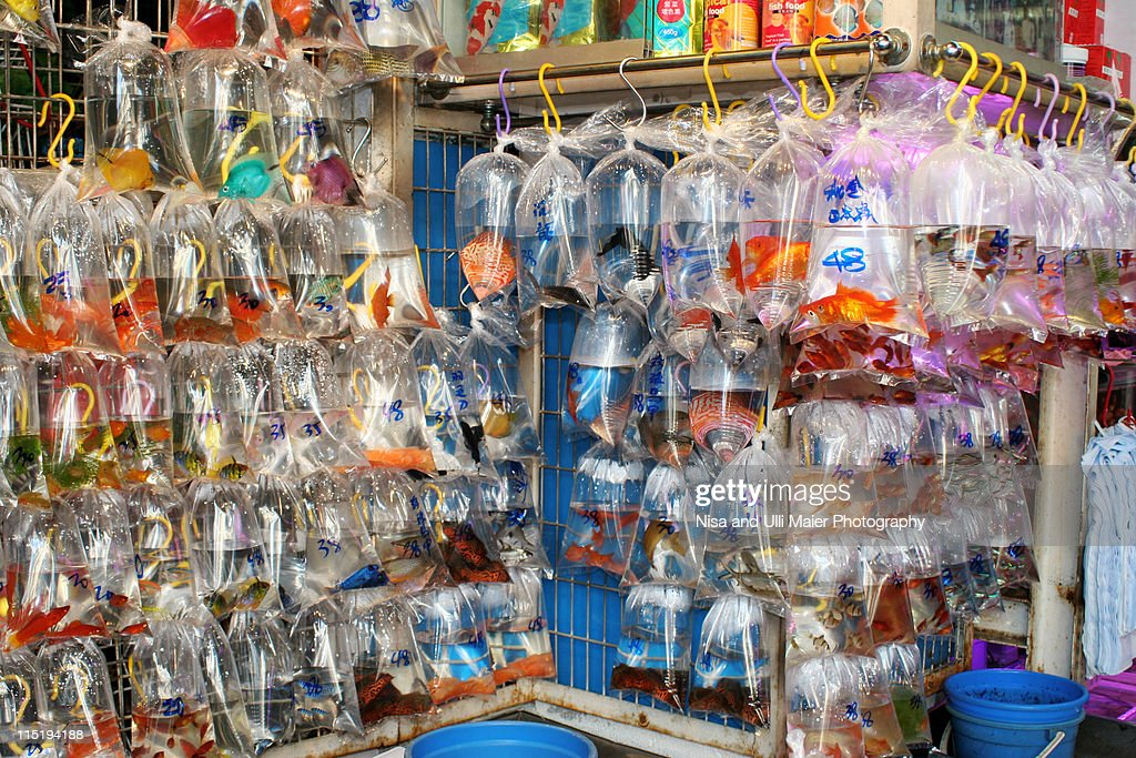 Goldfish street in Hong Kong. : Stock Photo