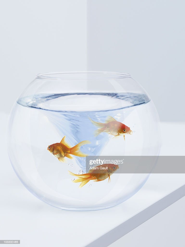 Goldfish struggling in fishbowl with whirlpool : Stock Photo