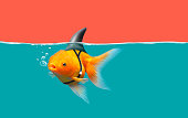 Goldfish with shark fin swim in green water and red sky, Gold fish with shark flip . Mixed media