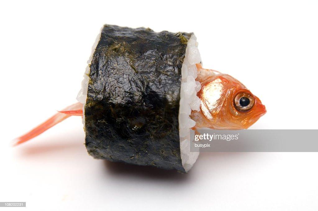 Goldfish Wrapped Up Like Sushi : Stock Photo