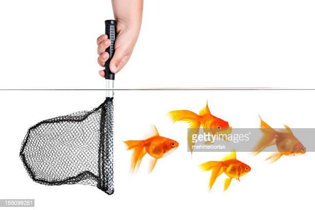 Goldfishes Escape
