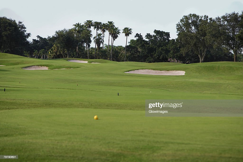 Golf ball in a golf course : Stock Photo