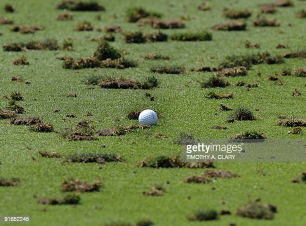 A golf ball sits among the divots on the driving range during a practice round on August 10 2009 at the 91st PGA Championship at the Hazeltine...