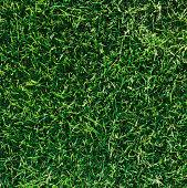 Golf course grass