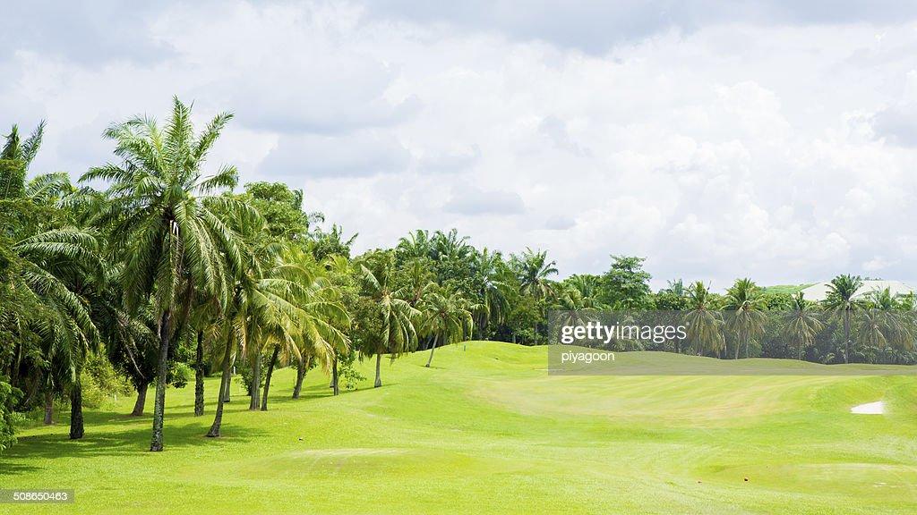 Golf course : Stock Photo