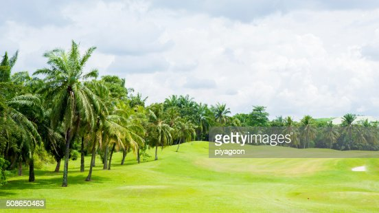 Golf course : Stock Photo