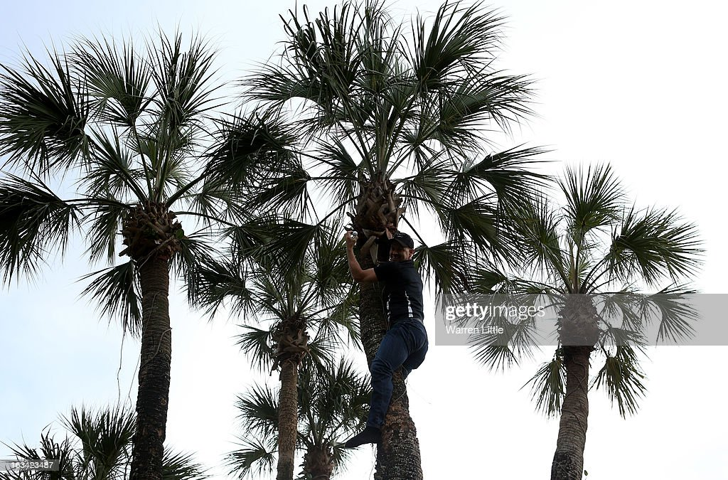 Golf fan Kurt Stelzer climbs a palm tree to claim the golf ball of Tiger Woods of the USA during the third round of the WGC - Cadillac Championship at the Trump Doral Golf Resort & Spa on March 9, 2013 in Doral, Florida.
