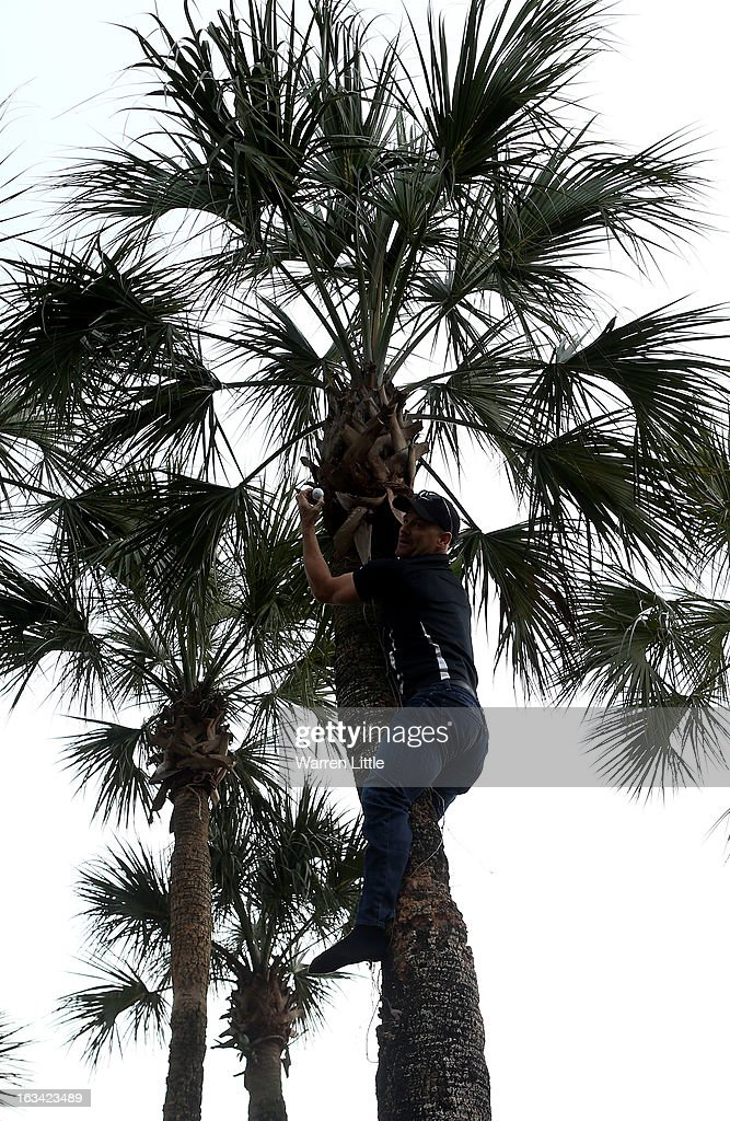 Golf fan Kurt Stelzer climbs a palm tree to claim the golf ball of <a gi-track='captionPersonalityLinkClicked' href=/galleries/search?phrase=Tiger+Woods&family=editorial&specificpeople=157537 ng-click='$event.stopPropagation()'>Tiger Woods</a> of the USA during the third round of the WGC - Cadillac Championship at the Trump Doral Golf Resort & Spa on March 9, 2013 in Doral, Florida.