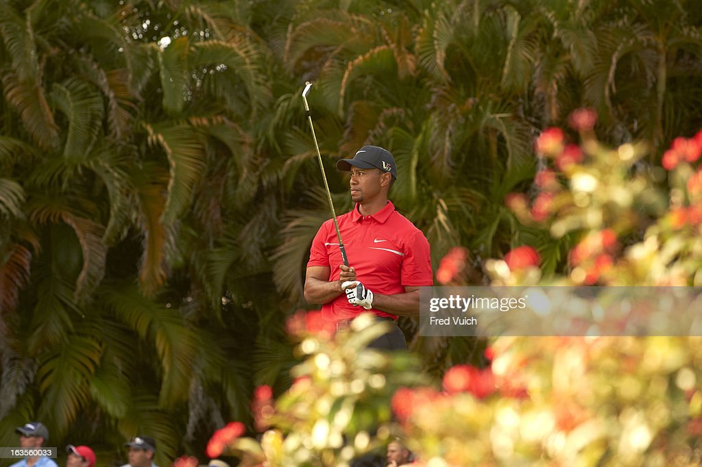 Tiger Woods in action, drive from No 15 tee during Sunday play at TPC Blue Monster Course of Doral Resort & Spa. Fred Vuich F137 )