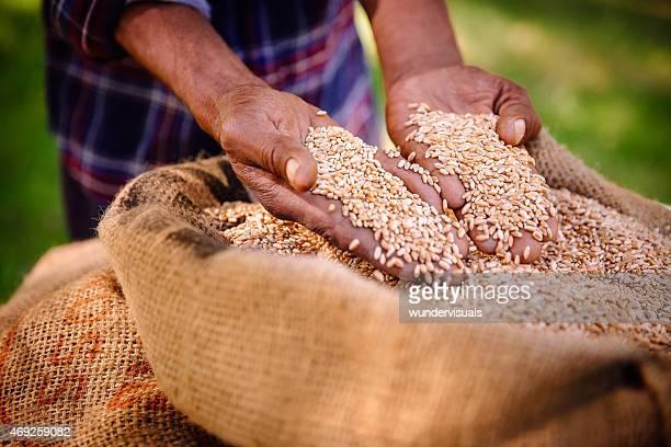 Une récolte de blé sur farm, de restauration et de produits