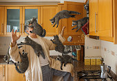 High resolution digital image of a man in a kitchen, early in the morning, opening a cabinet and unintentionally releasing a swarm of juvenile raccoons. The raccoons are streaming from the open cabine