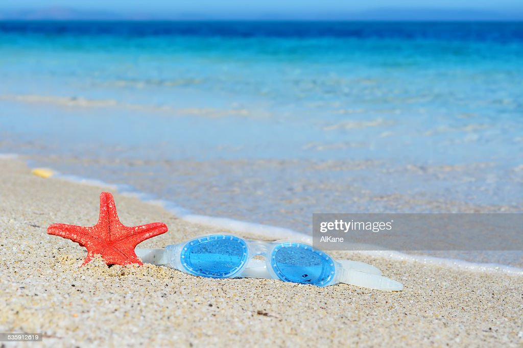 google and starfish : Stock Photo