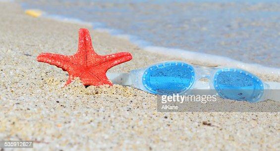 google e Estrela-do-mar : Foto de stock
