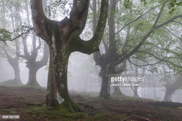 Gorbea Natural Park