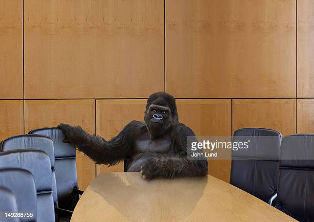 A gorilla in the board room