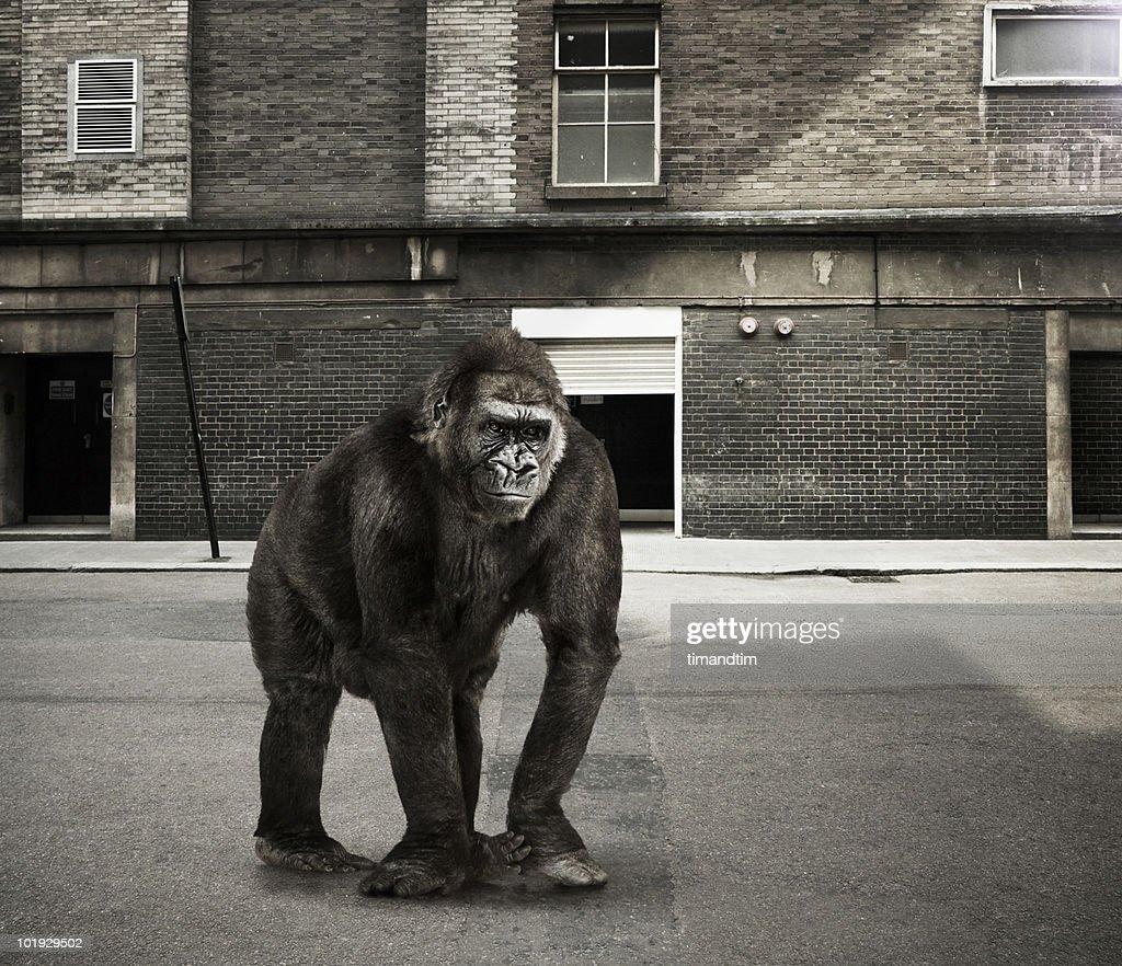 Gorilla in the street : Stock Photo