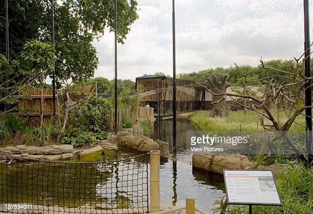 Gorilla Kingdom London Zoo London United Kingdom Architect Proctor Matthews Architects Gorilla Kingdom View From An Avery