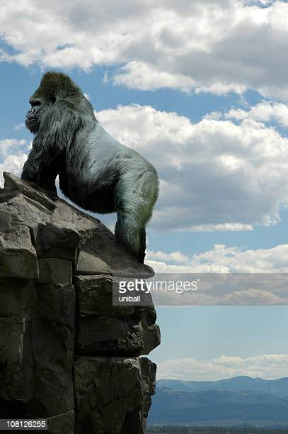 gorilla on rocks