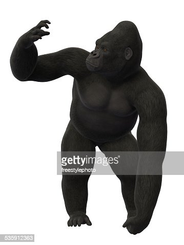 Gorila de Pé : Foto de stock