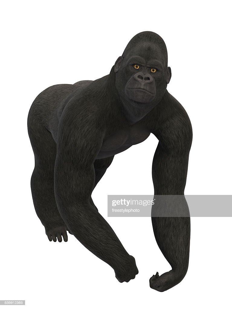 Gorila a : Foto de stock