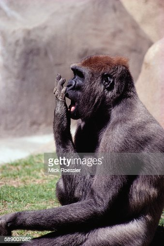 Los Angeles Zoo Stock Photos and Pictures | Getty Images