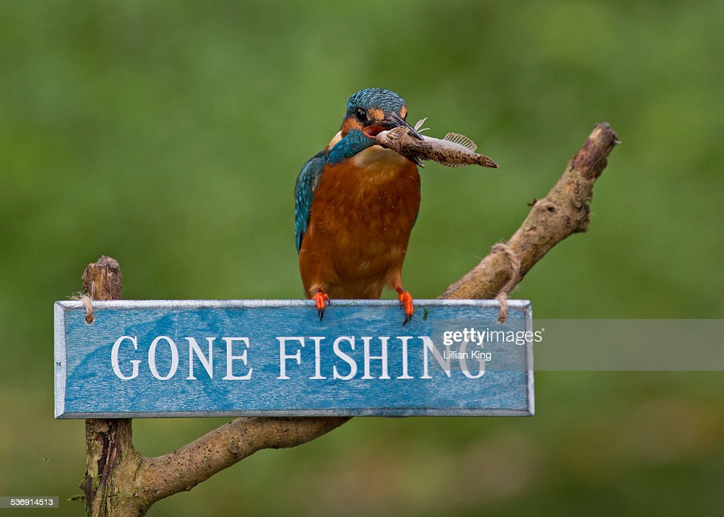 Got my fish stock photo getty images for Nh fishing license cost
