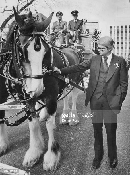 Governor's New Friend Gov Dick Lamm makes friends with one of the Clydesdale horses of famed team owned by AnheuserBusch brewers of Budweiser and...