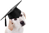 Graduation graduate puppy dog in cap on white with copy space