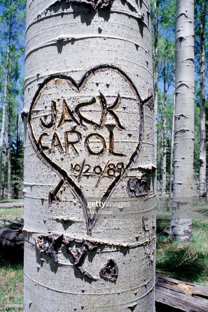 Graffiti carved onto tree trunk, Flagstaff, AZ