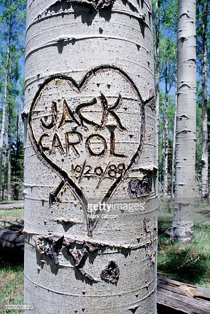Graffiti carved onto tree trunk, Flagstaff, AZ